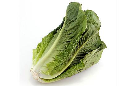 Cos-Lettuce_1